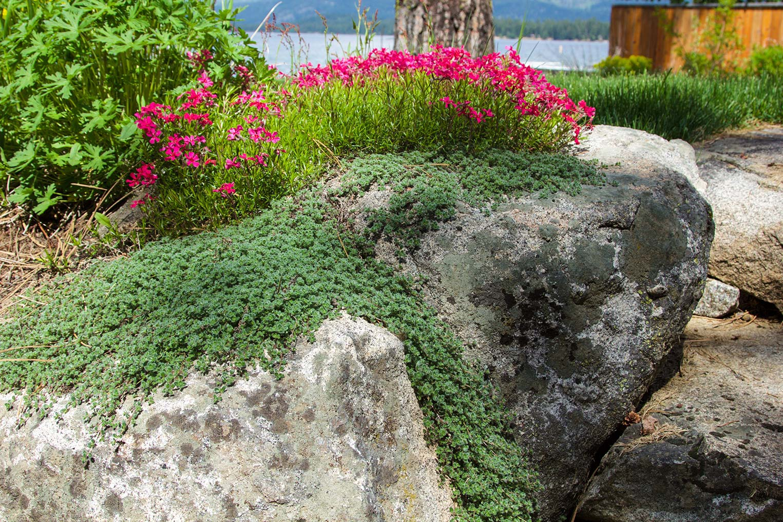 landscaping_16